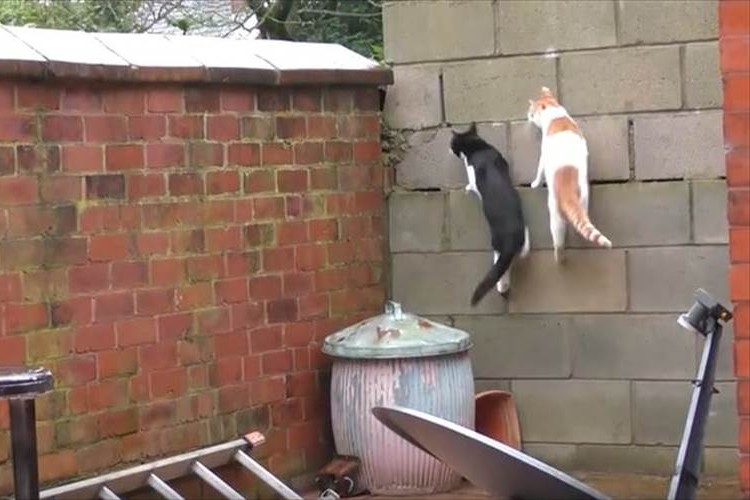 【希少動画】偶然にも全ての動きがシンクロ! 驚きすぎて固まっちゃった2匹の猫