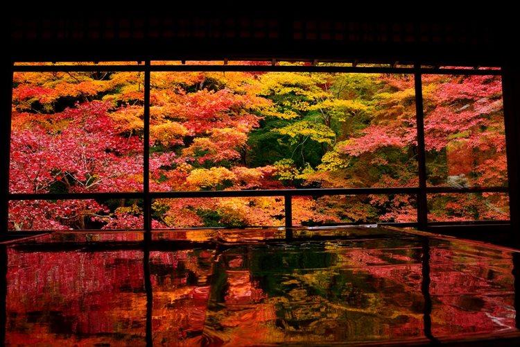 """絶景が反射する""""床もみじ""""が言葉にできない美しさ 京都・紅葉名所「瑠璃光院」"""