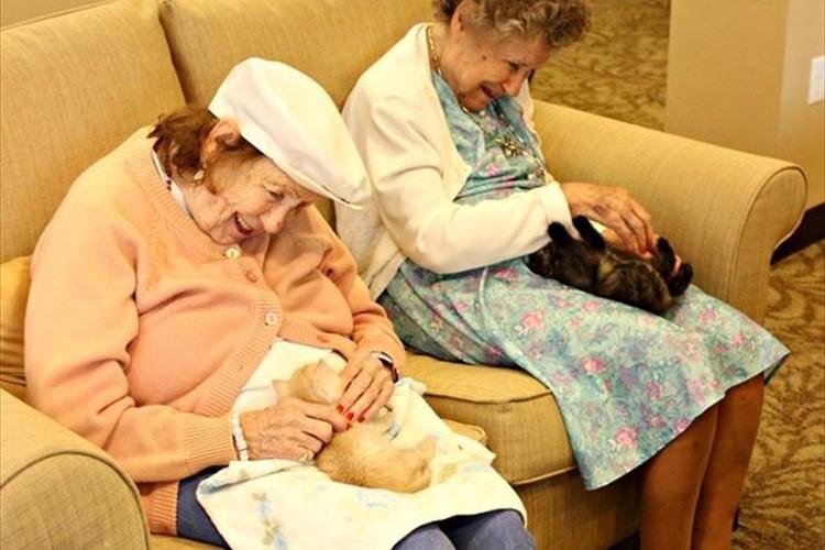 高齢者の心に喜びが!保護された子猫を老人ホームで育てる取り組みが海外で話題に!