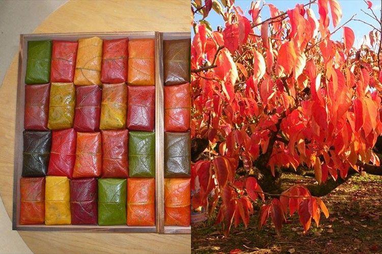 """秋の風物詩!紅葉で包んだ""""柿の葉寿司""""が色鮮やか 注文殺到!"""
