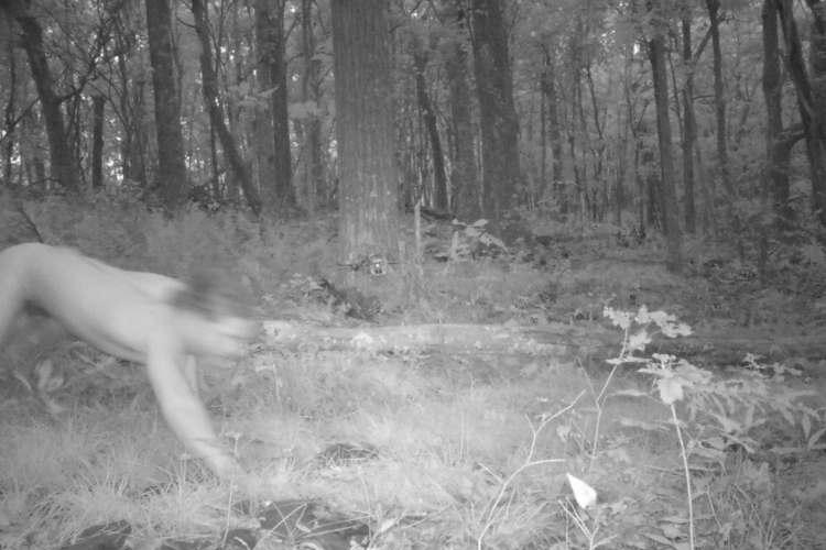 """野生動物観察のため森にカメラを仕掛けた結果、""""謎の全裸男""""が激写され困惑!?"""
