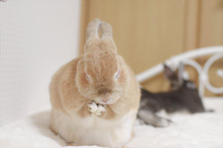 新しいふわふわのパッドを敷いてみたら…ウサギが気に入りすぎておかしなポーズになってた!