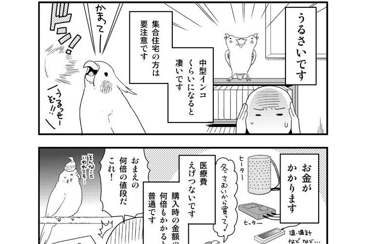 小鳥を飼う前に読んでほしい漫画。「噛みます」「うるさいです」「お金がかかります」でも...