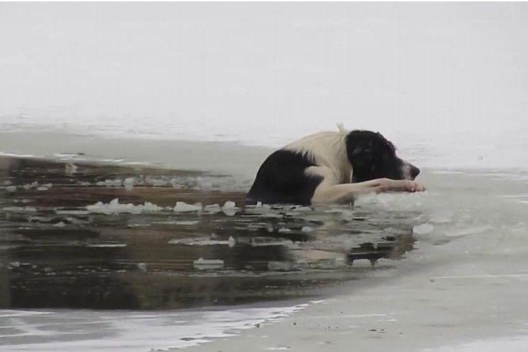 氷の池に落ちたワンコの姿が…!上半身裸おじさんの体を張った救出劇に拍手喝采!