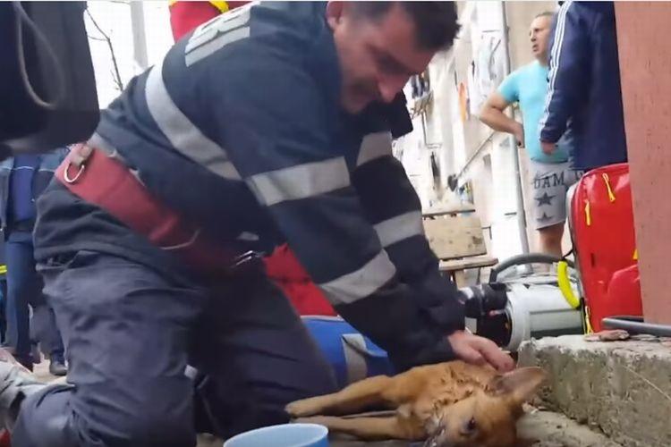 ピクリとも動かない危篤の仔犬を心臓マッサージする消防士、緊迫する現場の様子を捉えた映像