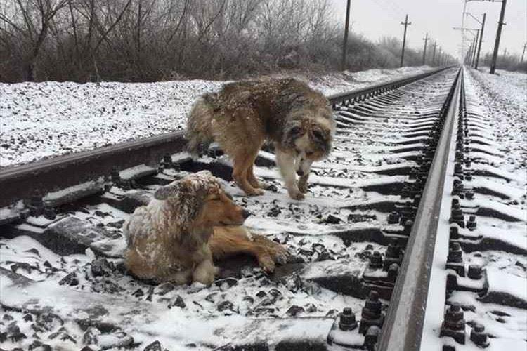 ケガで線路の上から動けない友達を想い、2日間ずっとそばにいたワンコの友情