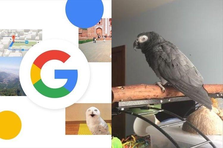 「ピコッ」!あの「OK Google」の効果音を完コピするオウムが話題に!