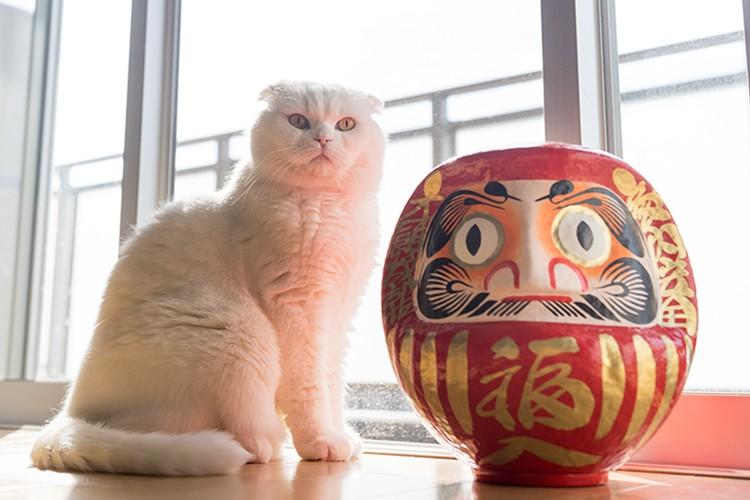 猫好き集まれ~!お正月も開催中の「ねこ休み展」に超巨大猫が到来