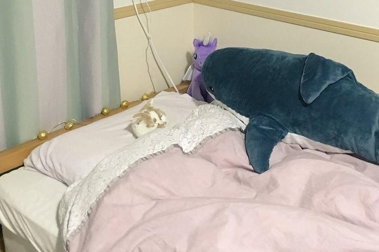 まるで人間みたい!ベッドの上で仰向けで寝るニャンコの姿に癒される人、続出!