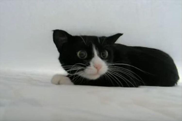 シーツの下になんかいる!?覗いてみたらネコがものすごい体勢でやってきた!