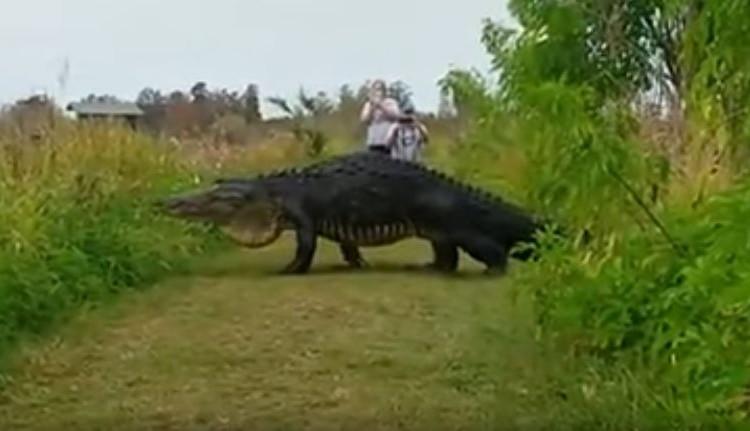 これはほぼ恐竜。至近距離で巨大ワニに遭遇した決定的瞬間!