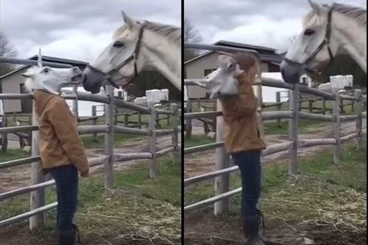 【実験】馬の前で馬のマスクを外してみた結果・・・馬の反応が面白い!