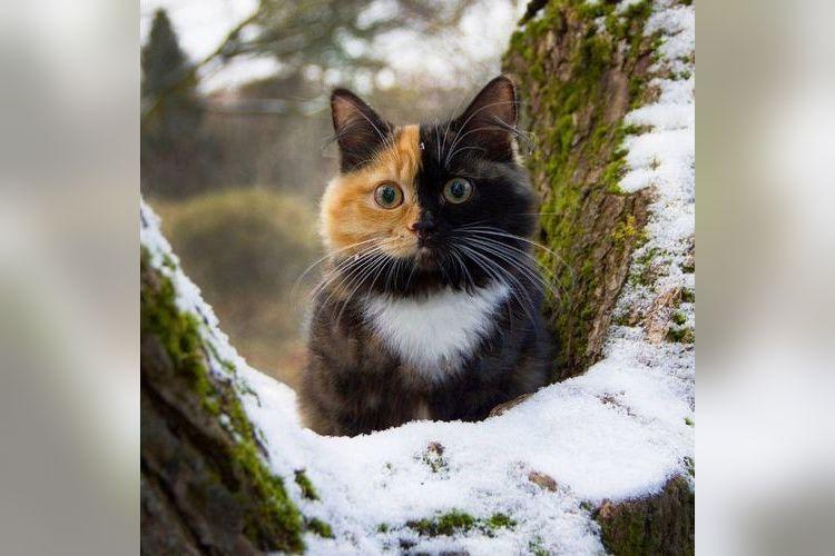 茶トラと黒猫のハーフ!?キレイに色が分かれているニャンコの姿に胸がキュンキュン!