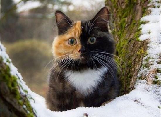 cat_top_02
