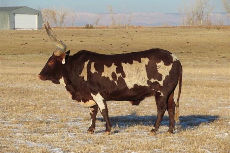 ちょっと、一体どうなってるの!?牛の体の一部が透けてみえると海外で話題に!