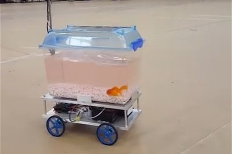 【動画】金魚も楽しそう!? 魚の動きを読み取って移動するロボットが話題に!