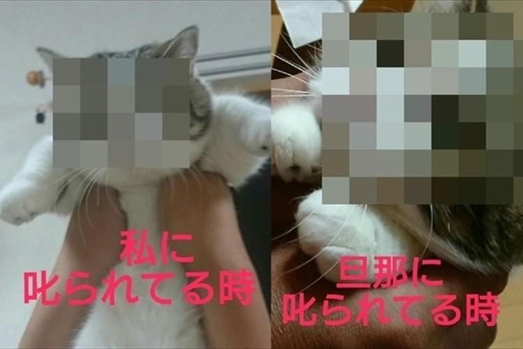 叱られる相手によって表情が違いすぎる…猫は愛嬌で許される相手をよく見てる!?