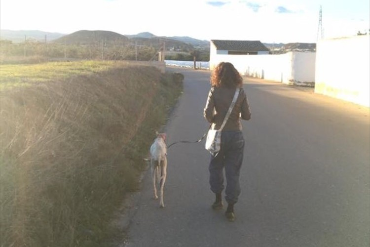 傷ついた足を引きずり獣医を誘導する野良犬、その先に待っていた光景に涙…