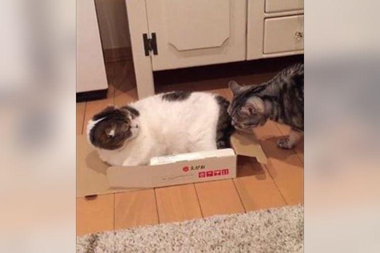 可愛いニャンコがいきなりどうした!?超高速で激しすぎる猫パンチが話題に!