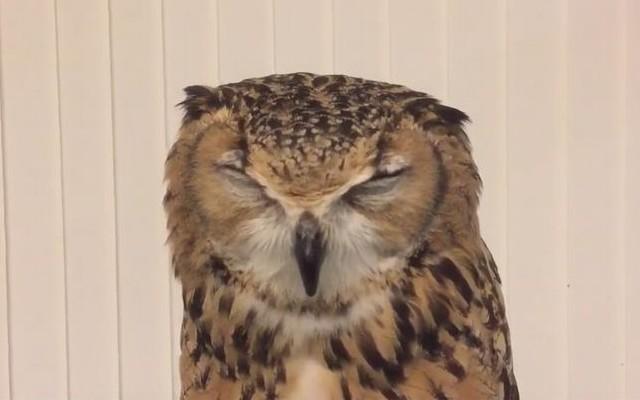 owl_01_640