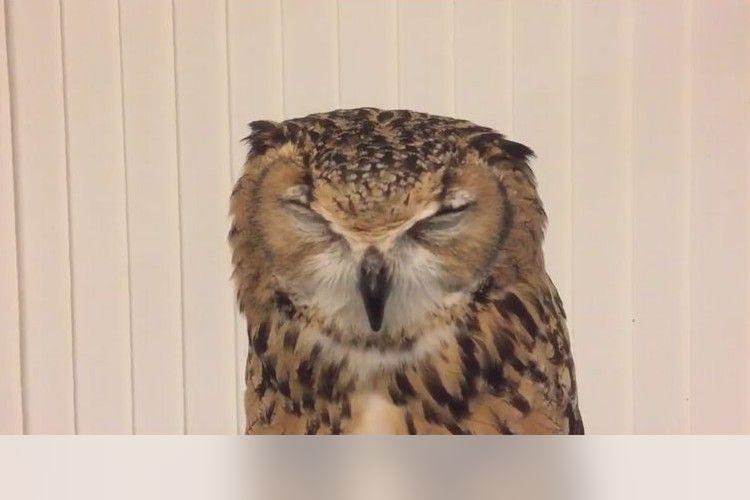 「くしゅんっ!」人間のようなくしゃみをするフクロウが可愛すぎると話題に!