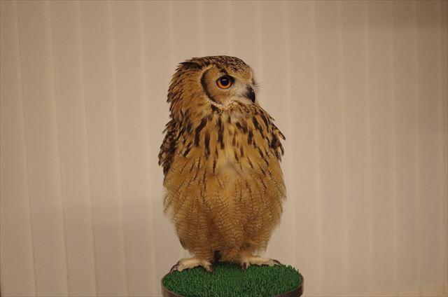 owl_top_640