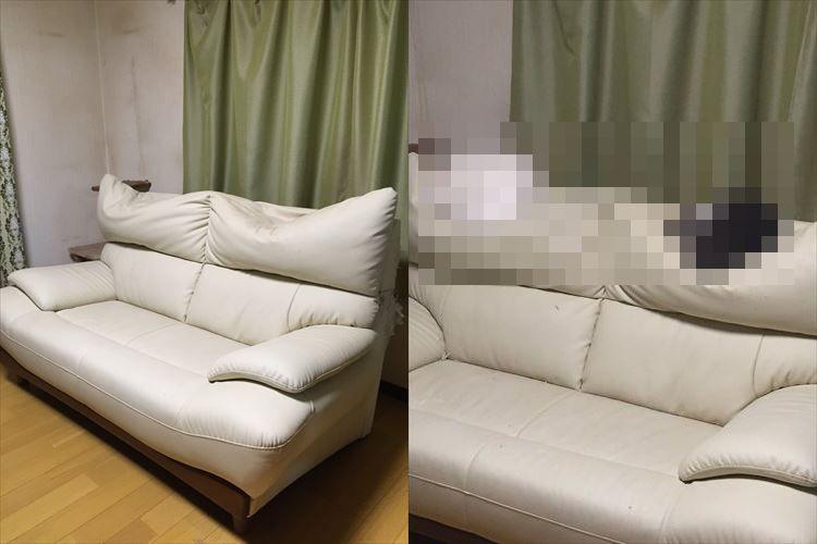 """ソファーの背もたれに大きな凹みが2ヵ所も…!その原因が""""可愛すぎる""""と話題に!"""