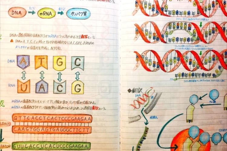 高1のときのにとった『生物のノート』がスゴい!もはや教科書になるレベル
