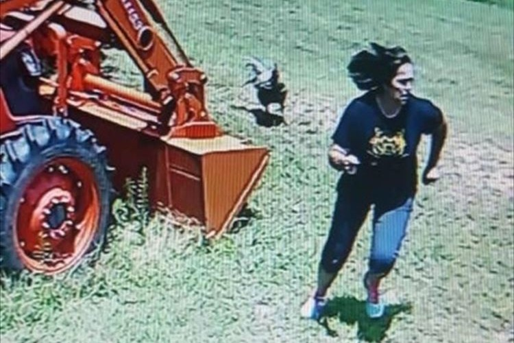「今日、ニワトリに追いかけられたの」母に言われて防犯カメラを確認してみたら…マジだった!