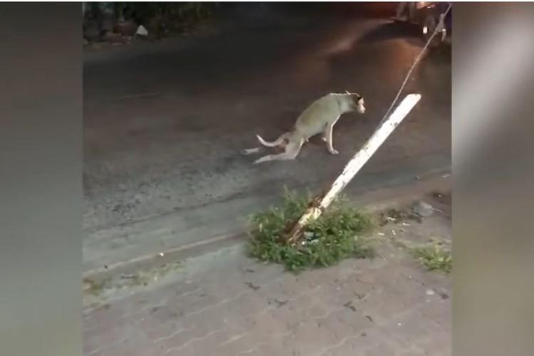 ワンコが足を引きずって歩いている…!車から降りて助けようとしたらまさかの結末に!