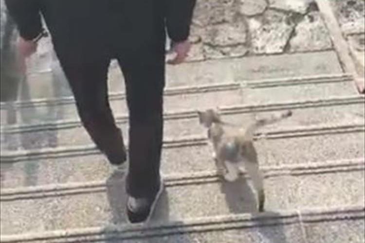 猫から猫の集会にお呼ばれされた映像に「うらやましい...」「ジブリみたい」の声