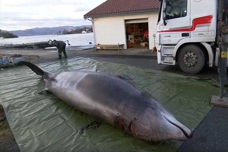 【SDGs】亡くなったクジラの胃の中から大量のビニール袋が…海洋ゴミ問題の深刻さが浮き彫りに