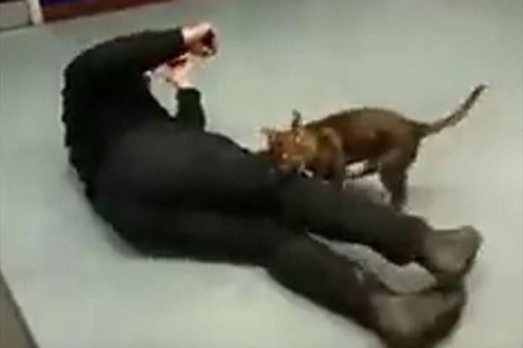 ガッチリかみついてはなさない! 警察犬を目指して訓練中のワンコが勇ましい