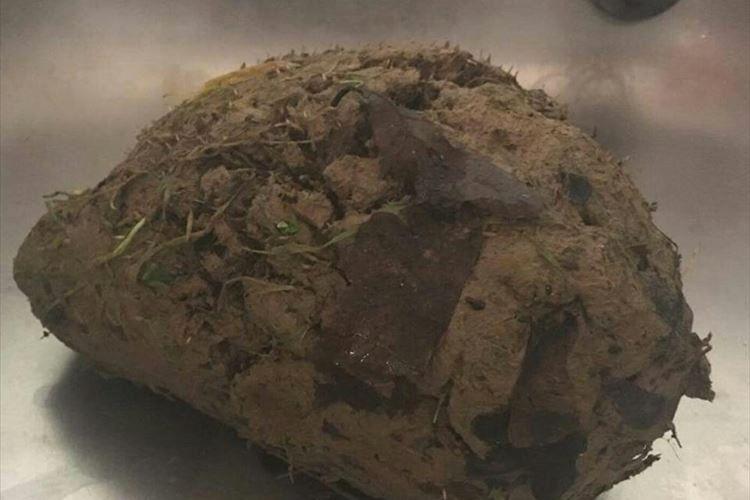 泥の塊が動物病院に運ばれてきた…!と思ったら、まさかの正体に驚愕!