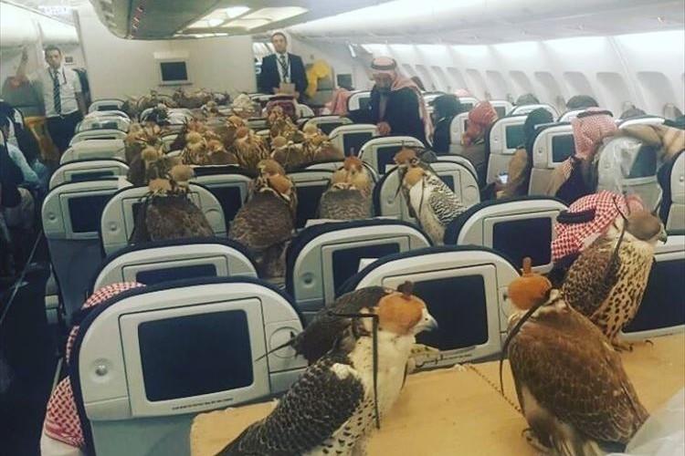 80羽の鷹のために飛行機のチケットを購入したサウジアラビアの王子、そのありえない光景に驚愕!