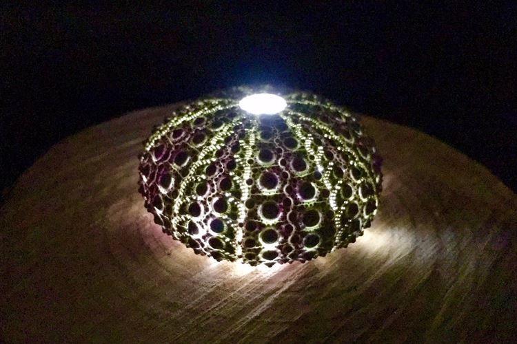 「海で拾った殻にLEDを仕込んでみた」ウニの殻を使った手作りランプが素敵だと話題に!