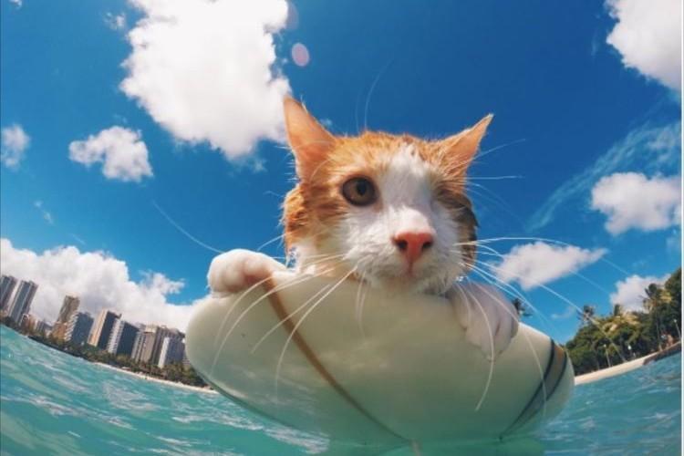 片目がなくなった猫、元気になってハワイでサーフィンを楽しむ