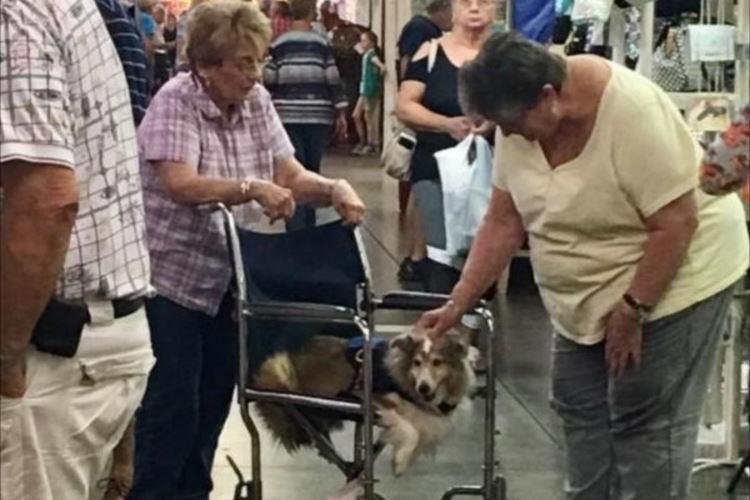 老犬を車いすに乗せて歩くおばあさんの愛に周囲の人々が感動
