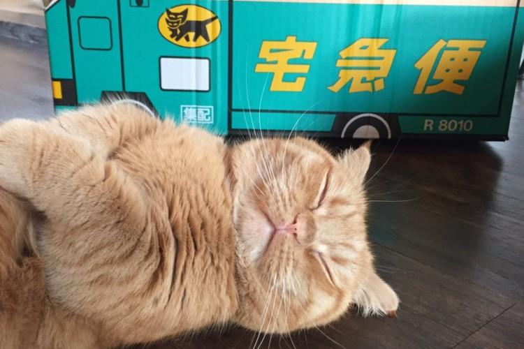 かわいいから許しちゃう。猫の手も借りたいのに配達業務を放棄中!?