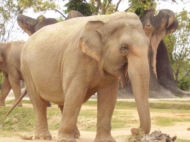 Elephanteating_640
