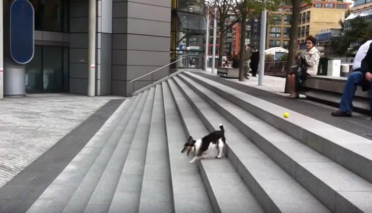 階段でひとり遊びをするワンコがめっちゃ可愛い♪