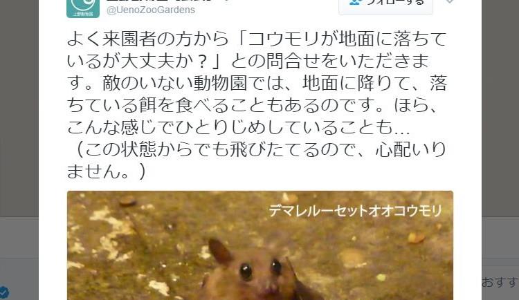 「コウモリが地面に落ちているけど大丈夫?」上野動物園のスタッフの答えに納得&コウモリ萌え
