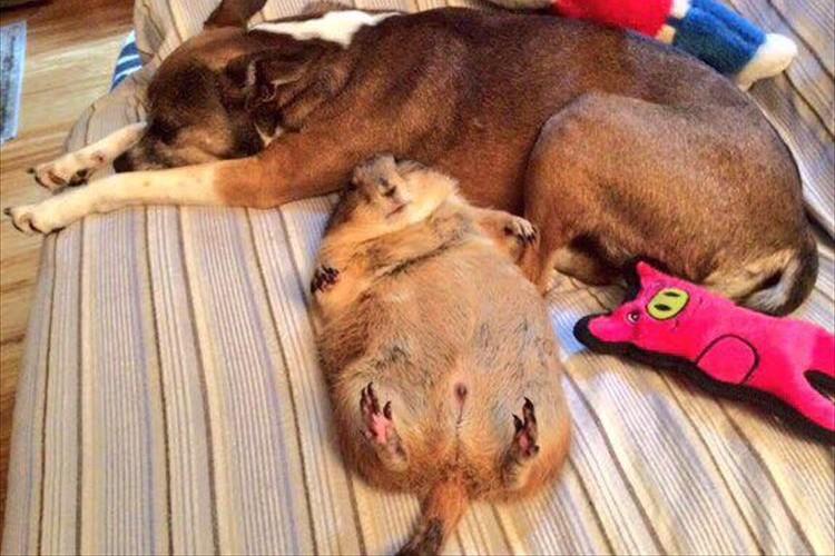 「助かって良かった…」火災から救出されて安心したプレーリードッグの姿が可愛いと話題に