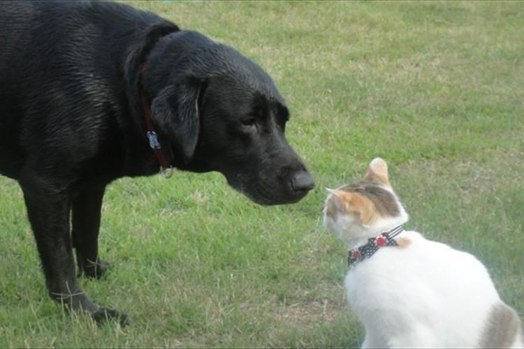 かまってほしい時どんな仕草をする?犬と猫の違いが分かるイラストが話題に!