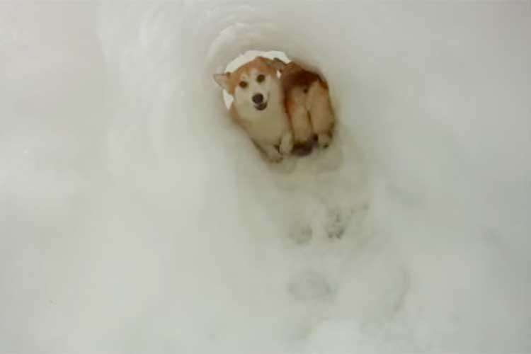 「いな〜いいな〜い、ばあっ!」雪のトンネルではしゃぐコーギーが可愛らしい♪