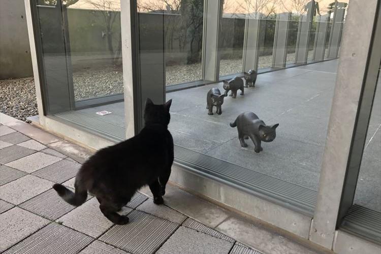 猫も気になって集まる!? 尾道市立美術館の『猫まみれ展』が面白そうだ♪