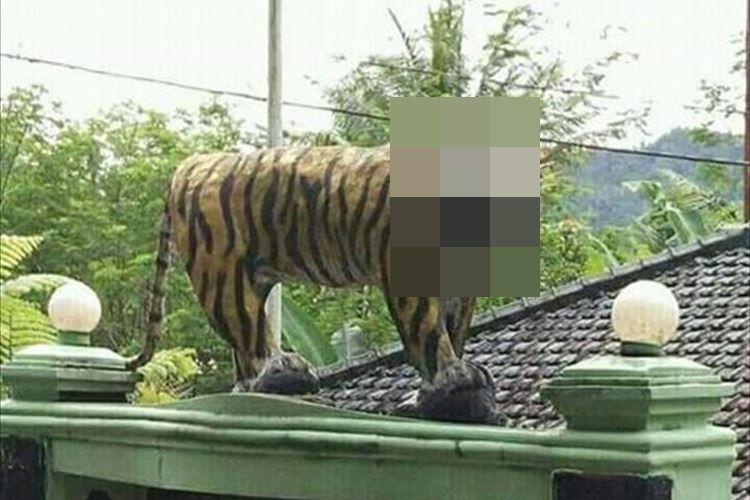 とある軍事施設に設置されていたトラの像…迫力不足のビジュアルが不評!?で撤去される事態に!
