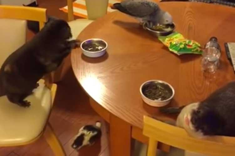 みんなで楽しいお食事中…のはずが、やってしまった! 全員硬直してコントのような結末