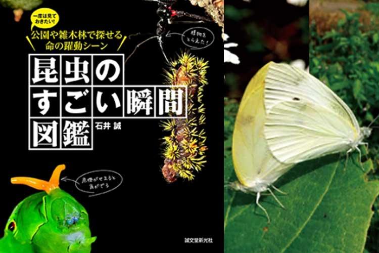 """小さな世界でも日々いろんな事が起きている!! """"昆虫たちの決定的瞬間ばかり集めた図鑑""""が面白い!"""