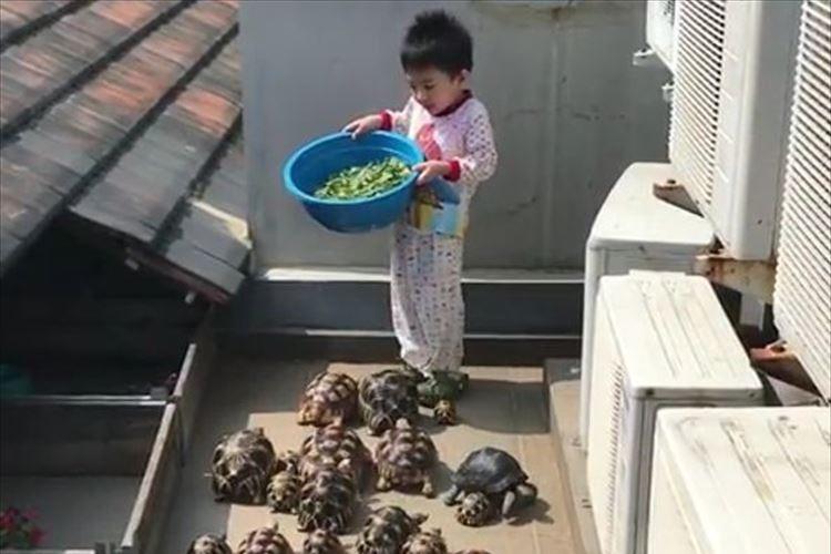 「なんて素敵な光景」少年が餌をあげるとゾロゾロと集まってくるカメ…ほのぼのとした日常に癒される